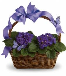 Violets And Butterflies