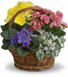 Spring Has Sprung Basket